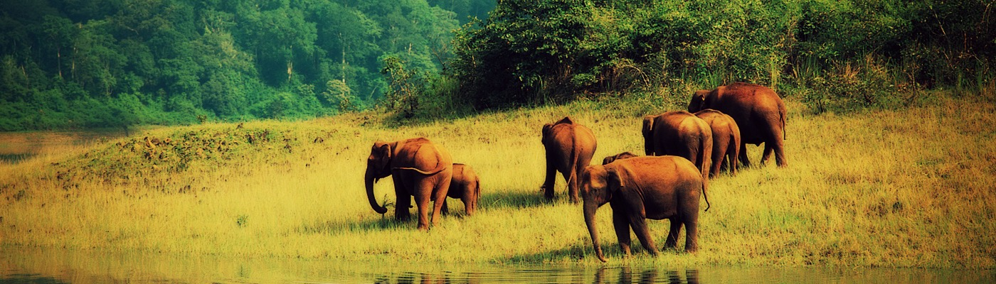 Taxi Service in Thekkady